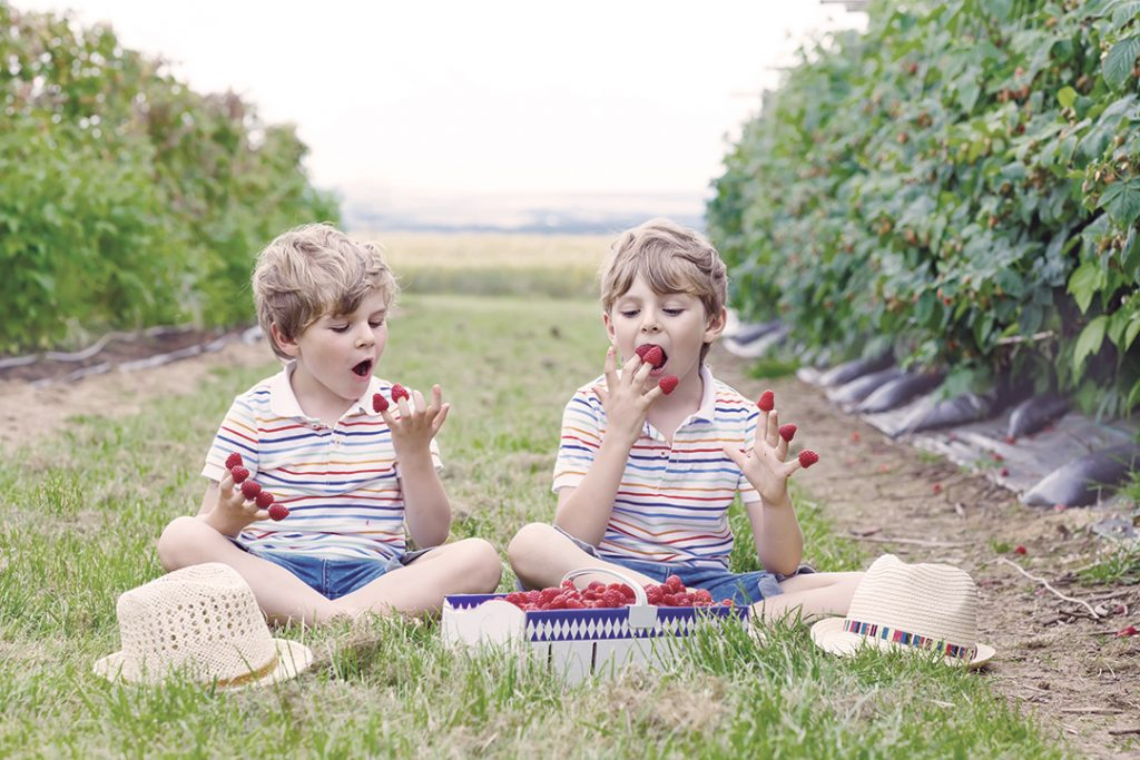 free-and-cheap-summer-activities-for-families-berry-picking